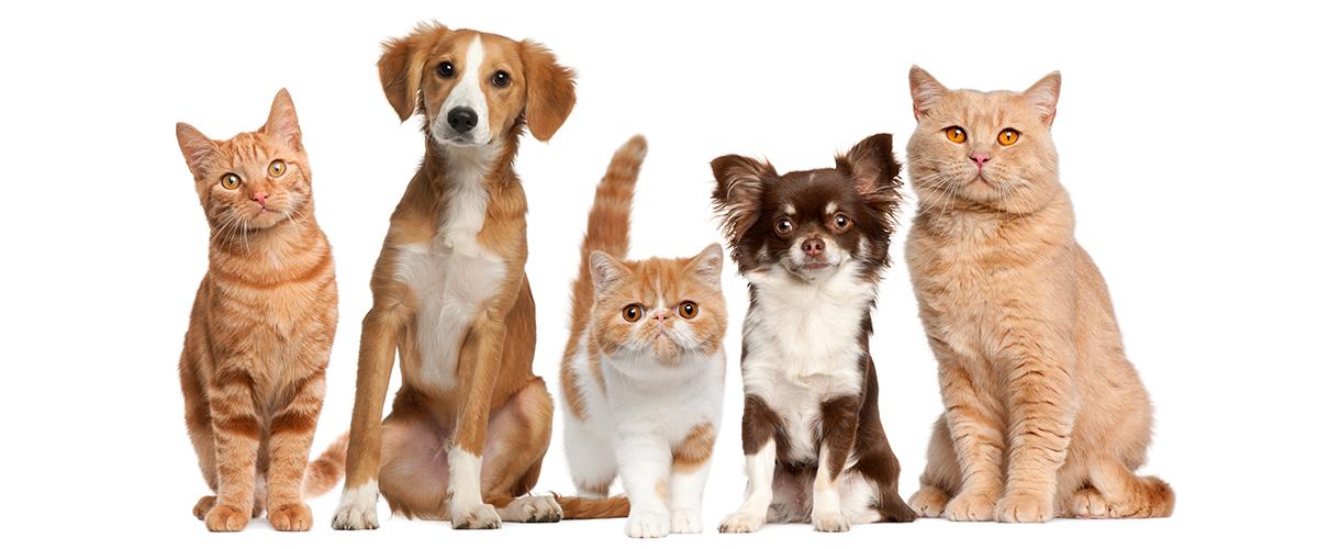 Cupos disponibles para esterilización e identificación de mascotas